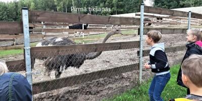 Ekskursija uz strausu fermu